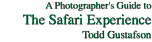 A Photographer's Guide to The Safari Experience Todd Gustafson